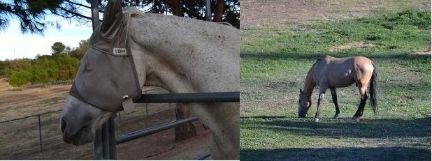 Name:  Horses.jpg Views: 312 Size:  74.0 KB