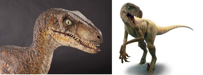 Name:  Raptors.jpg Views: 289 Size:  72.0 KB